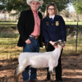 Let's Rodeo! The 74th Annual Katy ISD FFA Livestock Show and Rodeo