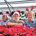 Brookwood Community Christmas Open House Scheduled for December 1st and 2nd